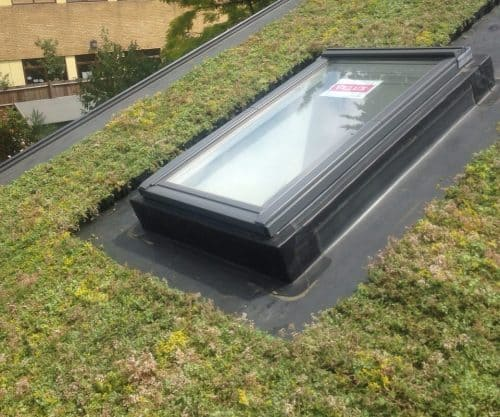 Modular Roof Trays Sedum Smart Boxes Easy To Install