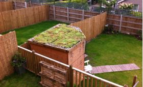 Stand. Sedum Shed Packs (<10° pitch)
