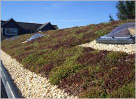 office building sedum roof