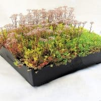 Wallbarn M-Tray® Wildflower