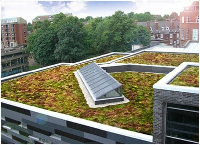 Leeds Univesity Sedum Green Roof