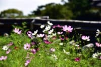 wildflower green roof