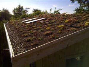 Semi-Intensive Green Roof