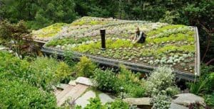 Intensive Green Roof