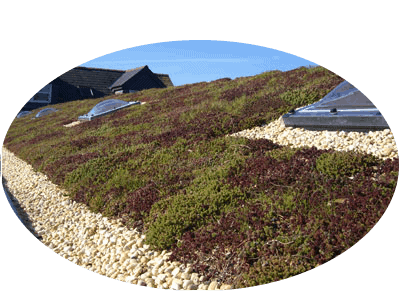 office green roof