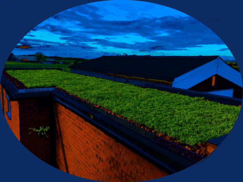 sedum roof trays