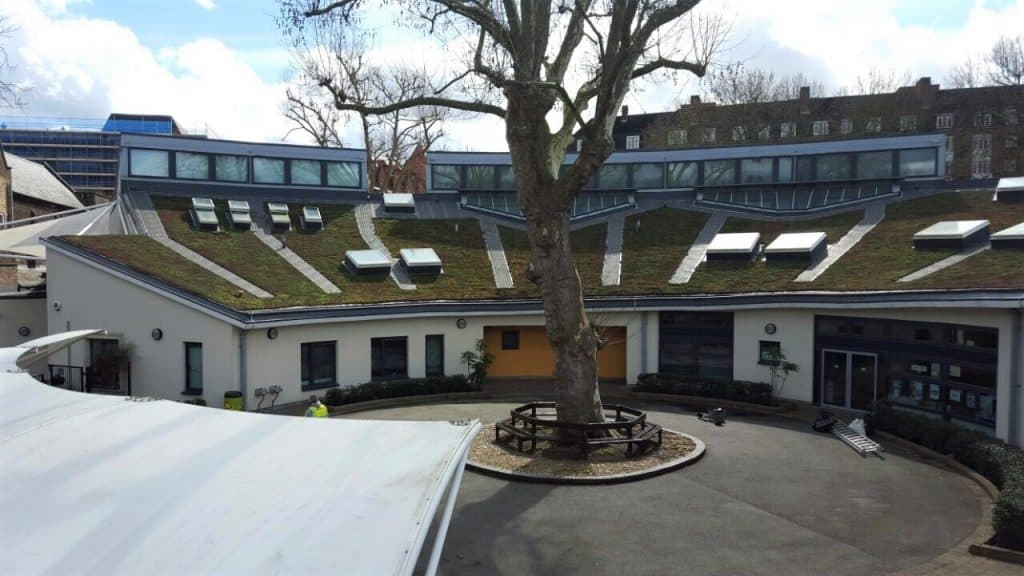 green roof Maintenance Service Hammersmith