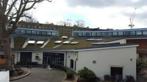 Green Roof Maintenance Project Hammersmith