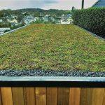 Garden Roof Sedum Green Roof