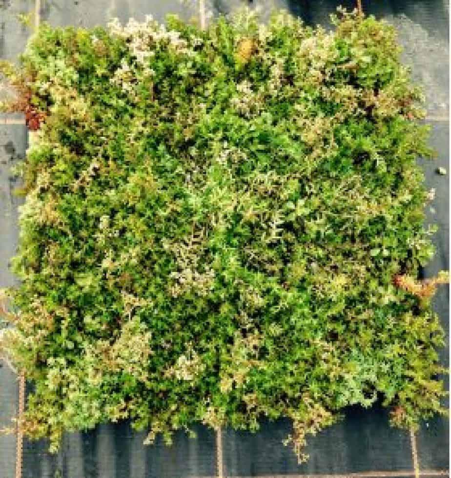sample smart box roof tray