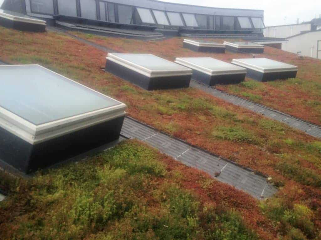 Sedum Green Roof in Autumn