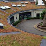 Sedum Roof Maintenance Hammersmith