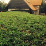 EPDM Roof pre wildflower roof