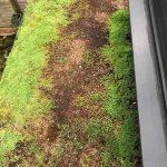 damaged sedum green roof