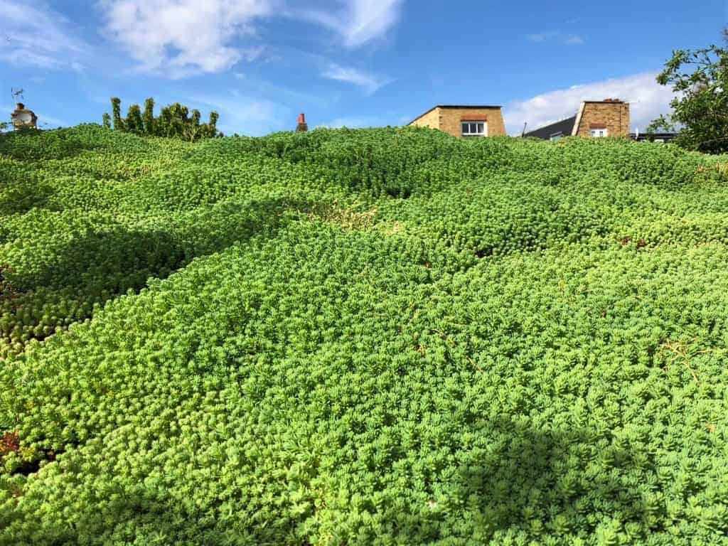 Green roof maintenance service in West London