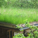 Straw biodiverse roof top