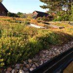 Sedum Wildflower Roof