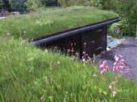Wildflowers Green Roof