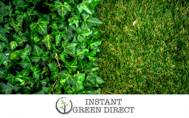 instant green