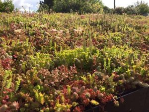 Sedum Roof Trays