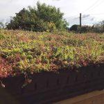 Sedum Living roof trays