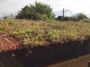 Sedum Living roof trays