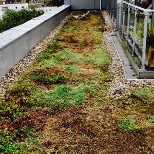 Gelding Court Green Roof Maintenance After